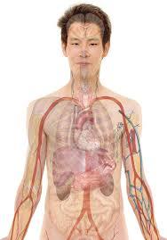 Les effets de l'alcool bien-être sur l'estomac