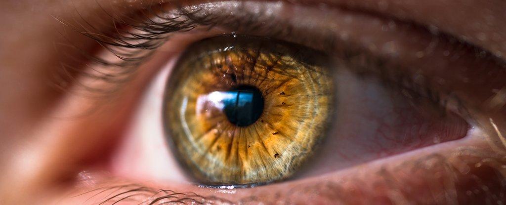 Vizmaxx - meilleure vue - comprimés- dangereux - pas cher